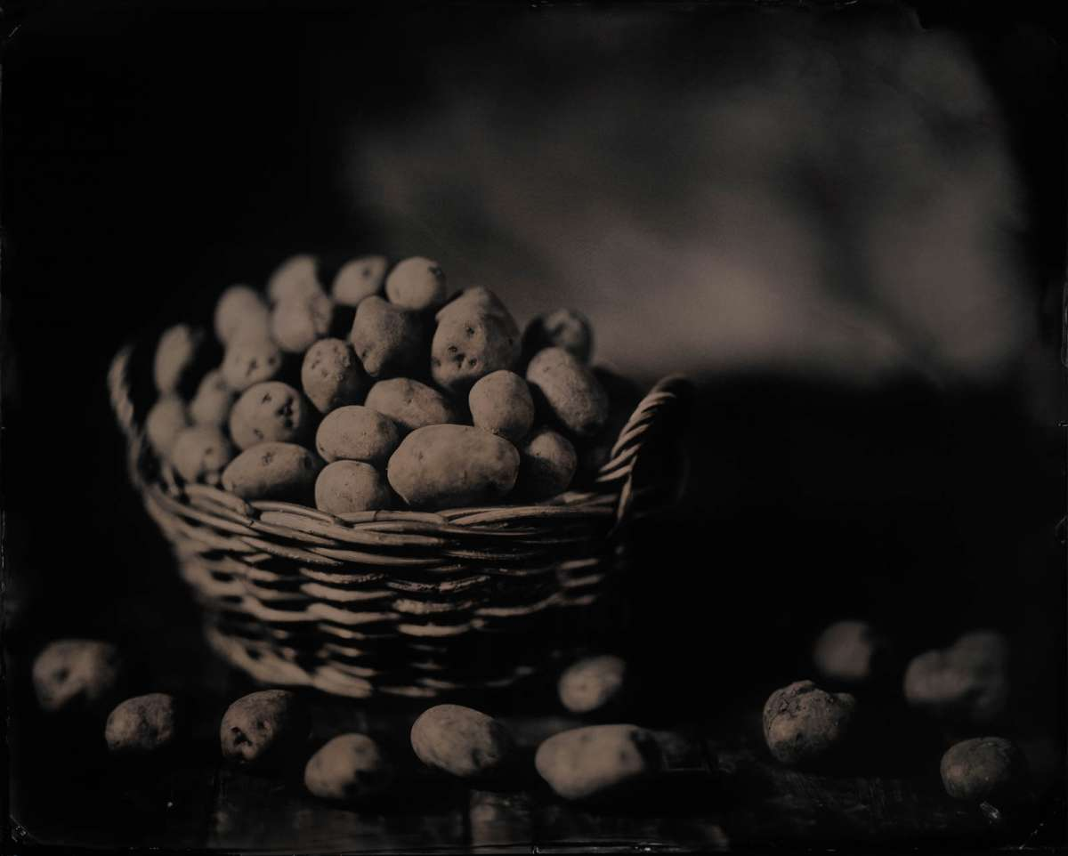 Basket of Potatoes, 2017