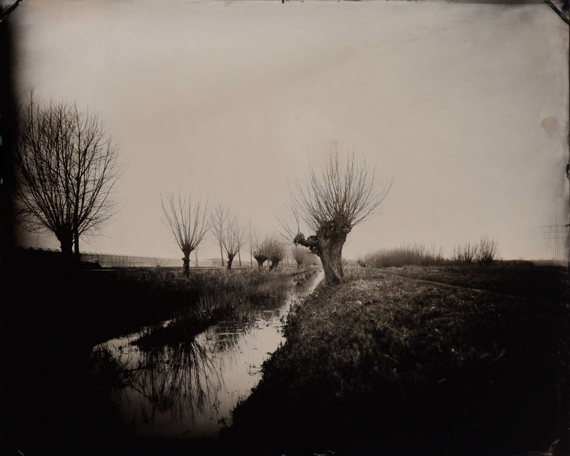 Landscape with Path and Pollard Willows, Etten-Leur, 2020